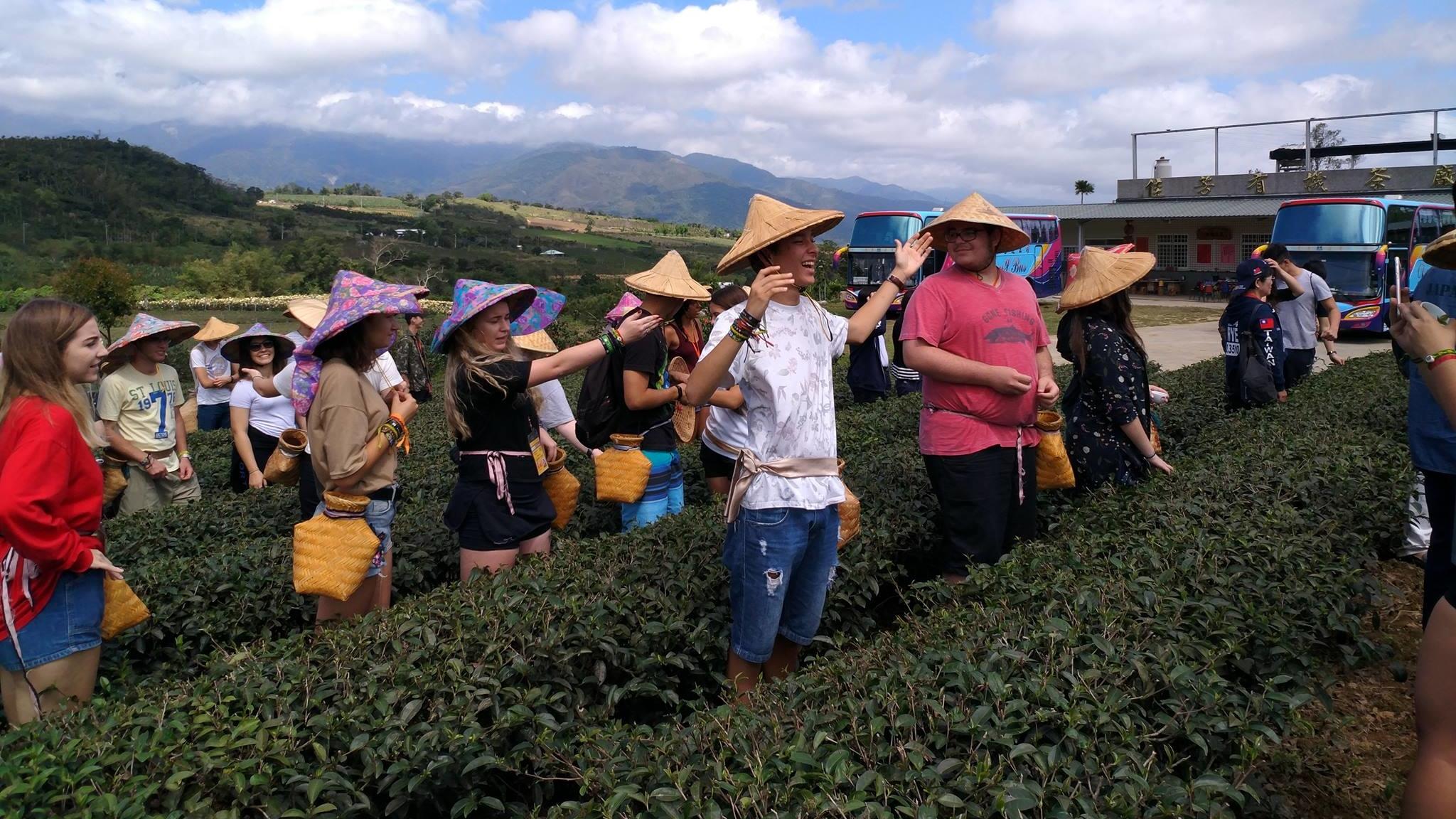2018年佳芳茶園採茶體驗活動 !